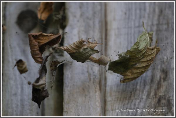feuilles-013.jpg