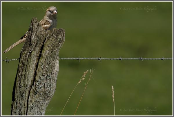 oiseaux-15.jpg